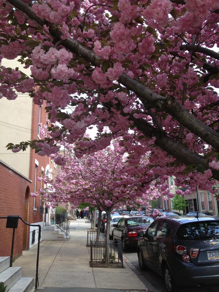 Philadelphia-Fairmount-Pink-Flowers-Blooming