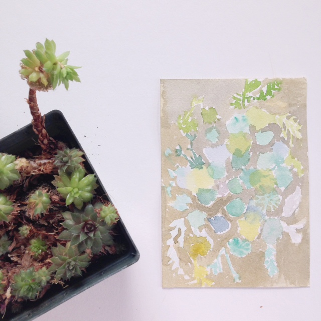 Marissa-Huber-Succulent-1