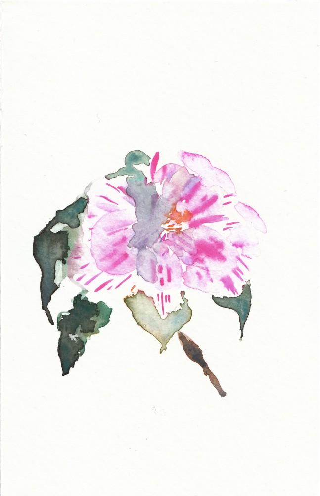 COFTA-Oriana-Lewton-Leopold-11-Camellia